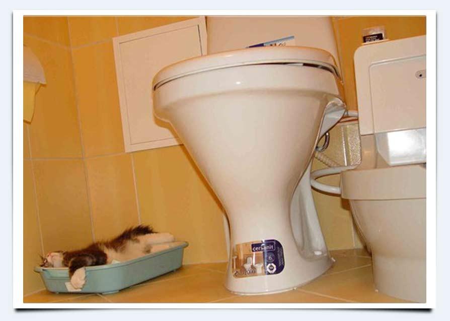 Смотреть порно куни в туалете