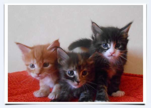 Корм для кошек Farmina ND: отзывы и разбор состава